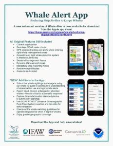 Whale Alert App