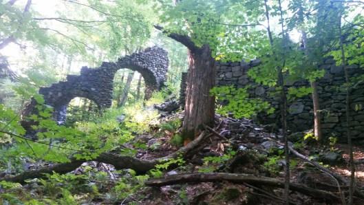 Madame Sherri's Forest